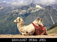Нажмите на изображение для увеличения Название: 1 (4).jpg Просмотров: 339 Размер:353.5 Кб ID:103272