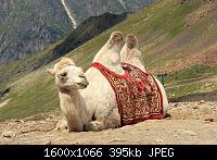 Нажмите на изображение для увеличения Название: 1 (5).jpg Просмотров: 356 Размер:394.8 Кб ID:103273