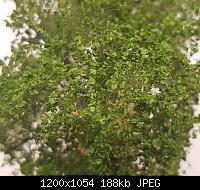 Нажмите на изображение для увеличения Название: ScenicExpress-004.jpg Просмотров: 61 Размер:187.8 Кб ID:191382