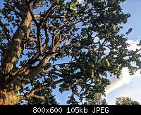 Нажмите на изображение для увеличения Название: 7509aeste.jpg Просмотров: 14 Размер:104.6 Кб ID:191507