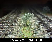 Нажмите на изображение для увеличения Название: P4010264.jpg Просмотров: 829 Размер:183.1 Кб ID:105260