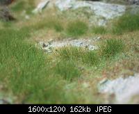 Нажмите на изображение для увеличения Название: P5200197.jpg Просмотров: 840 Размер:162.0 Кб ID:105266