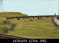Нажмите на изображение для увеличения Название: коровы.jpg Просмотров: 589 Размер:127.2 Кб ID:41813