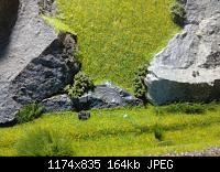 Нажмите на изображение для увеличения Название: 1-1-1-1.jpg Просмотров: 342 Размер:163.7 Кб ID:161801