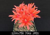 Нажмите на изображение для увеличения Название: DSCN8736.jpg Просмотров: 587 Размер:70.1 Кб ID:159612