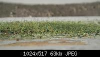 Нажмите на изображение для увеличения Название: зелень 2-1.jpg Просмотров: 955 Размер:62.7 Кб ID:39098